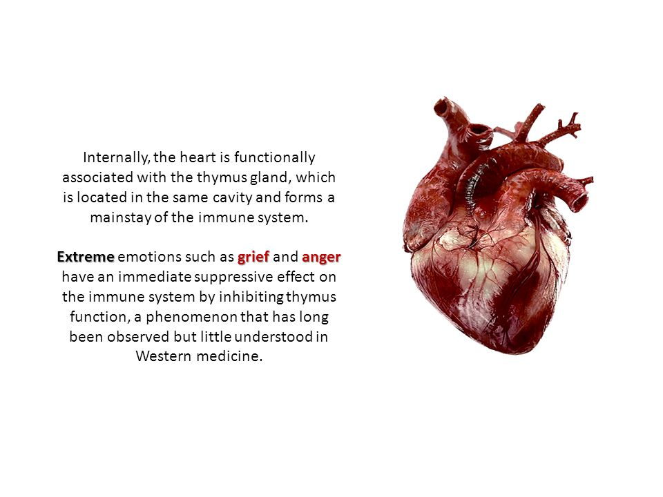 Externally, the heart is related to the tongue, to which it is connected by the heart muscle.