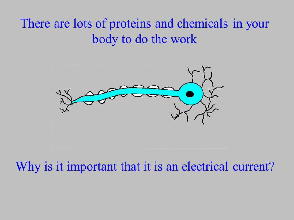 There are lots of proteins and chemicals in your body to do the work Why is it important that it is an electrical current?