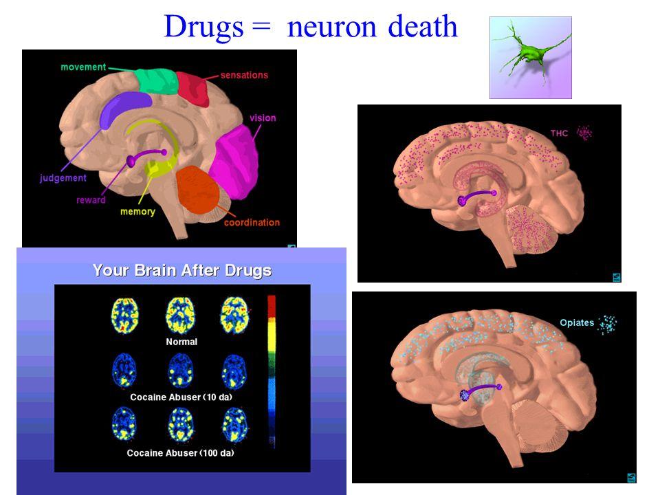 Drugs = neuron death