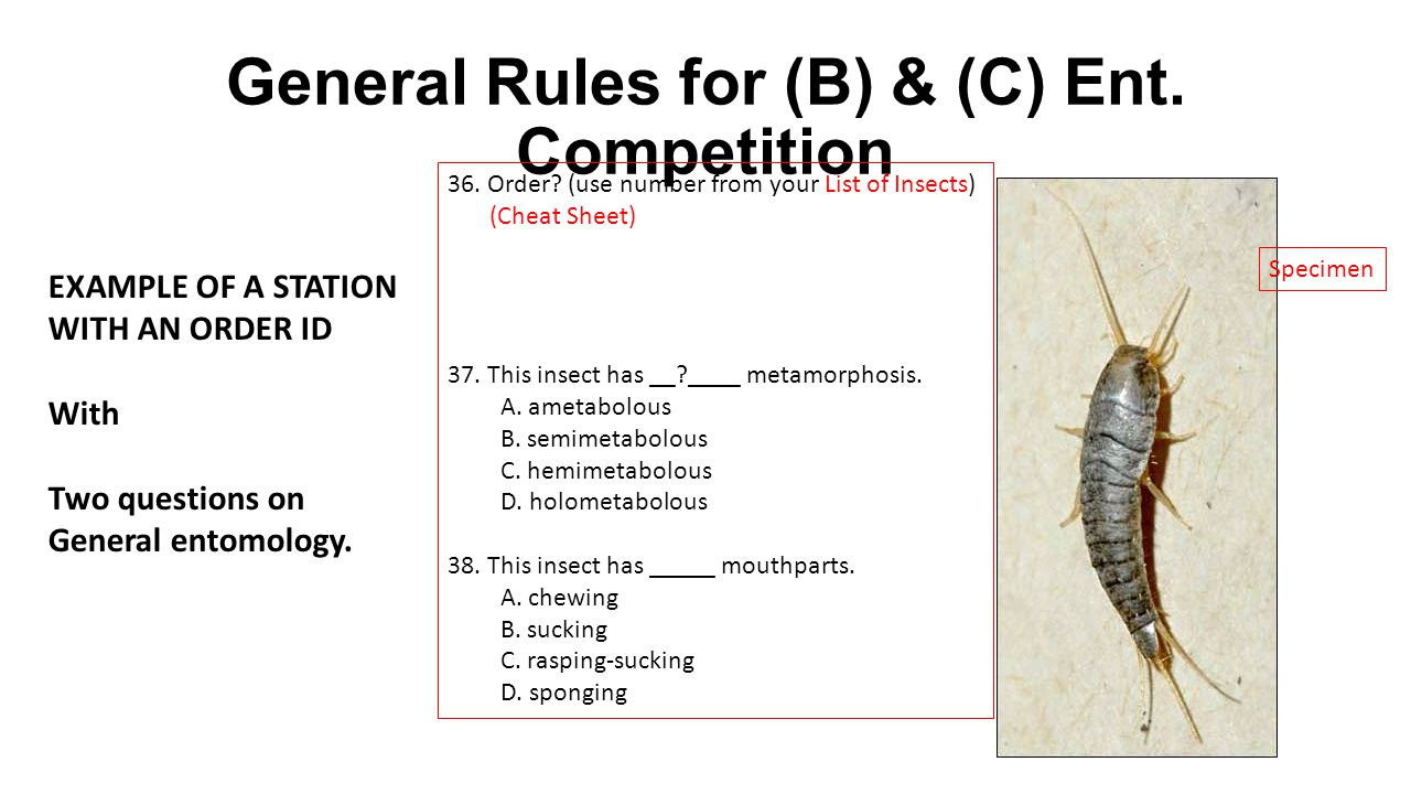 General Rules for (B) & (C) Ent. Competition 36. Order? (use number from your List of Insects) (Cheat Sheet) 37.This insect has __?____ metamorphosis.