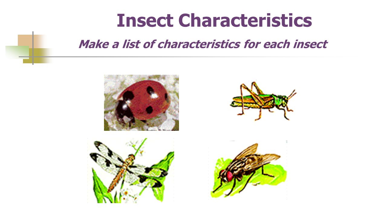 Insect Characteristics Make a list of characteristics for each insect