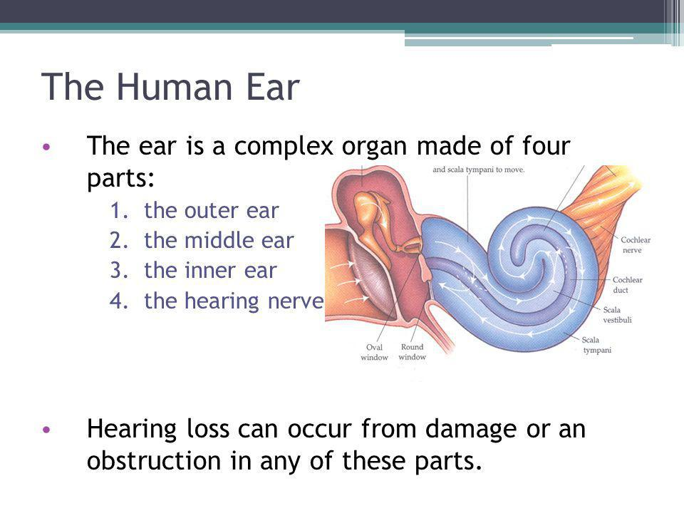 The Human Ear The ear is a complex organ made of four parts: 1.the outer ear 2.the middle ear 3.the inner ear 4.the hearing nerve Hearing loss can occur from damage or an obstruction in any of these parts.