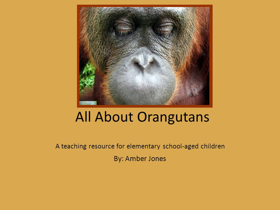 All About Orangutans A teaching resource for elementary school-aged children By: Amber Jones