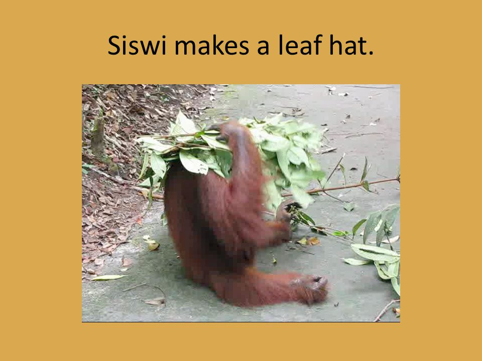 Siswi makes a leaf hat.