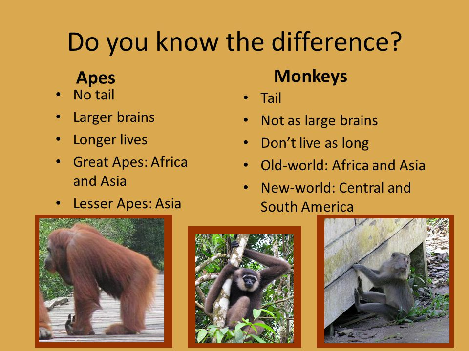 Do you know the difference.