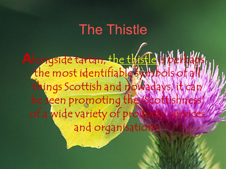 The Thistle A longside tartan, the thistle is perhaps the most identifiable symbols of all things Scottish and nowadays, it can be seen promoting the Scottishness of a wide variety of products, services and organisations.the thistle