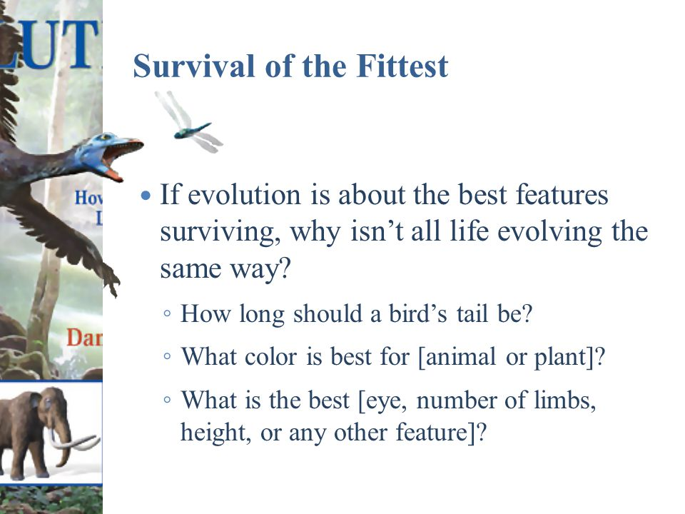Survival of the Fittest If evolution is about the best features surviving, why isn't all life evolving the same way.