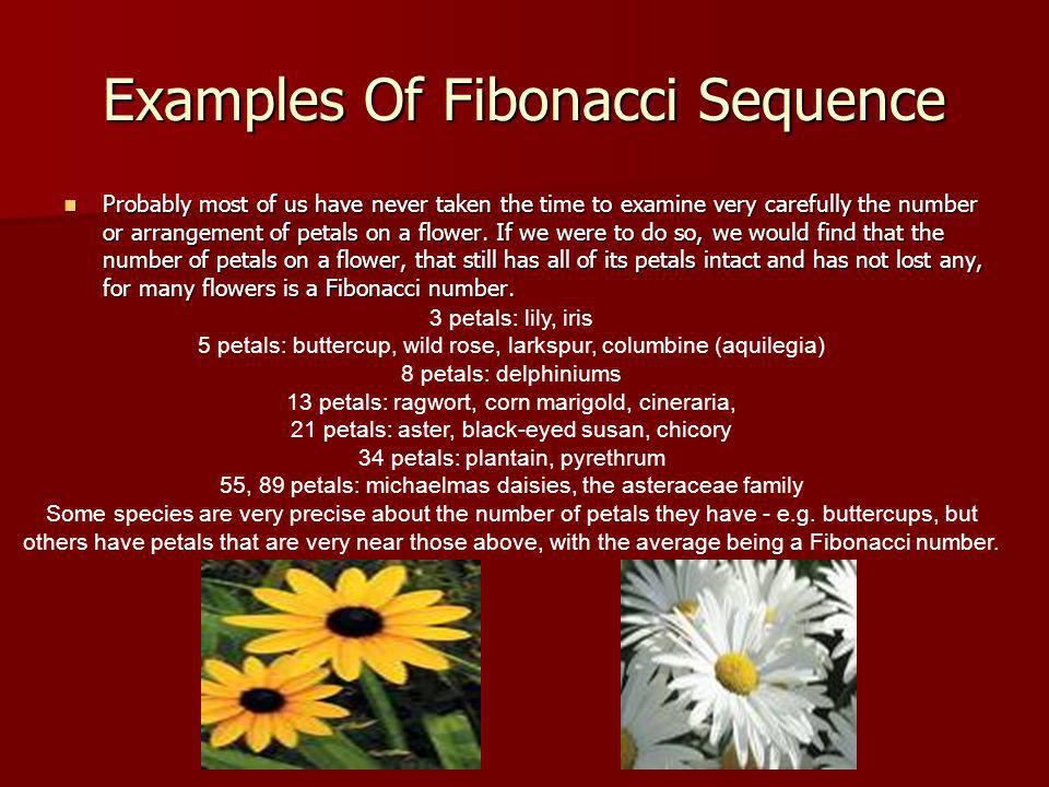 Examples Of Fibonacci Sequence Probably most of us have never taken the time to examine very carefully the number or arrangement of petals on a flower.