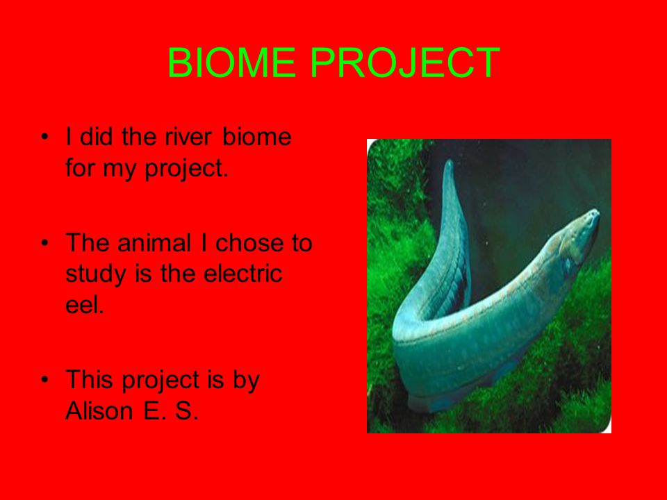 BIOME PROJECT I did the river biome for my project.