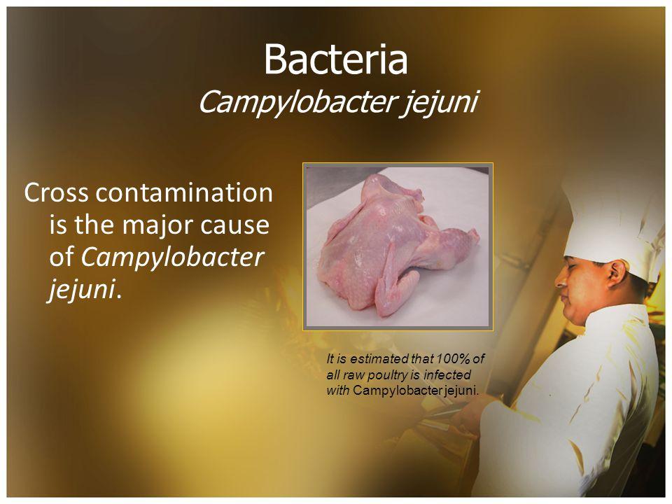 Bacteria Campylobacter jejuni Cross contamination is the major cause of Campylobacter jejuni.