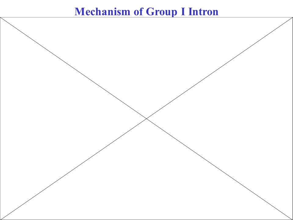 Mechanism of Group I Intron