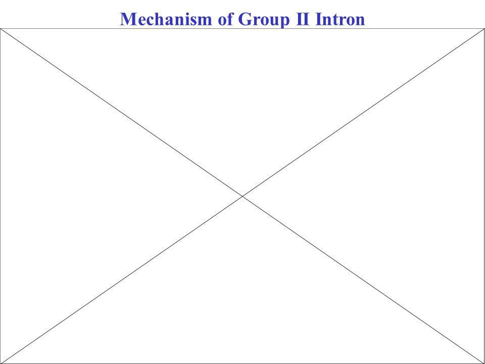 Mechanism of Group II Intron