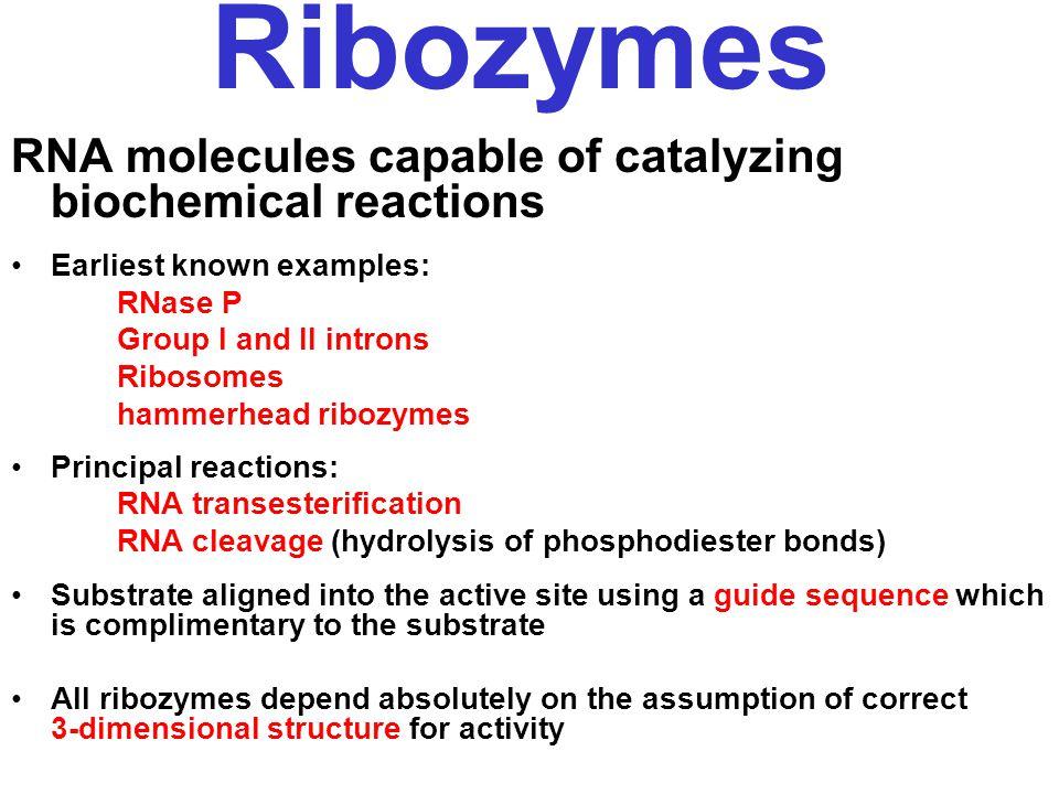 Peptide transfer mechanism