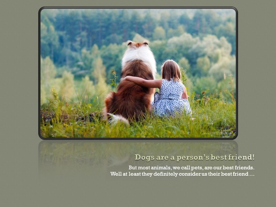 But most animals, we call pets, are our best friends.