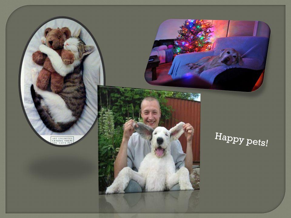 Happy pets!