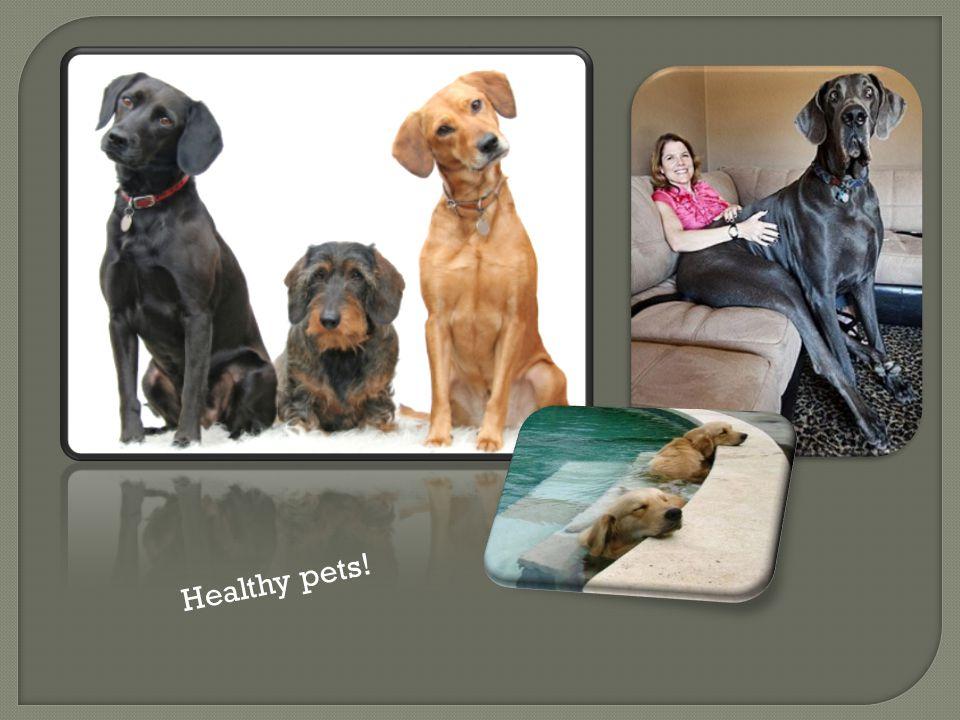 Healthy pets!