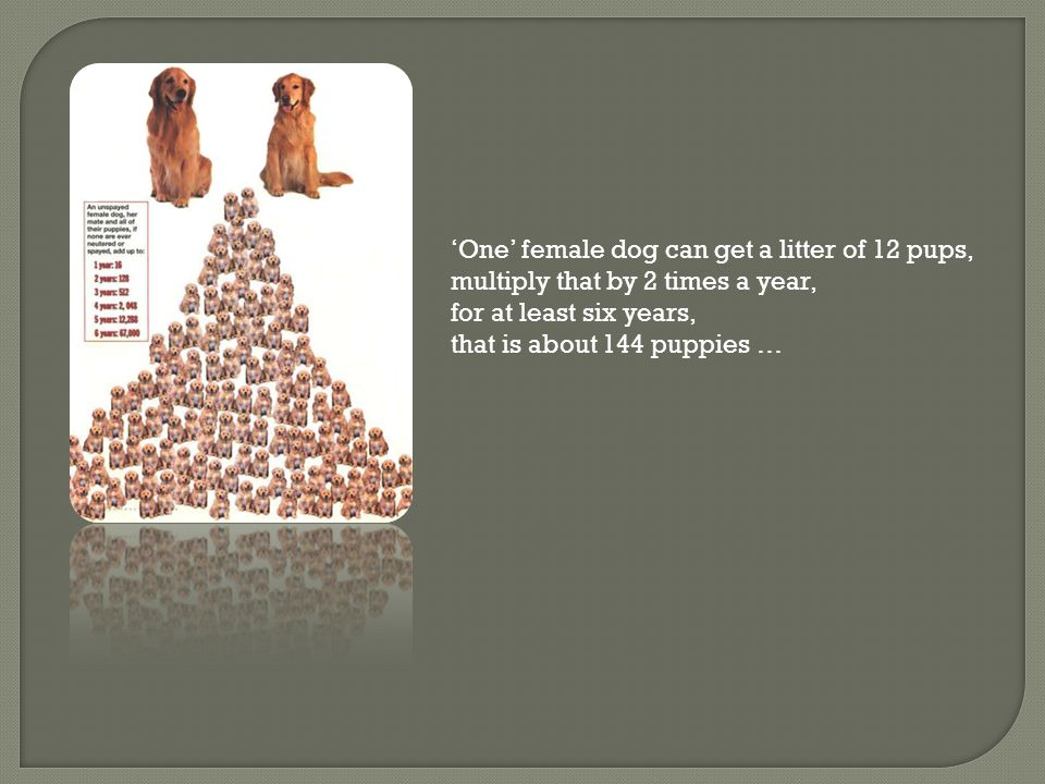 'One' female dog can get a litter of 12 pups, multiply that by 2 times a year, for at least six years, that is about 144 puppies …