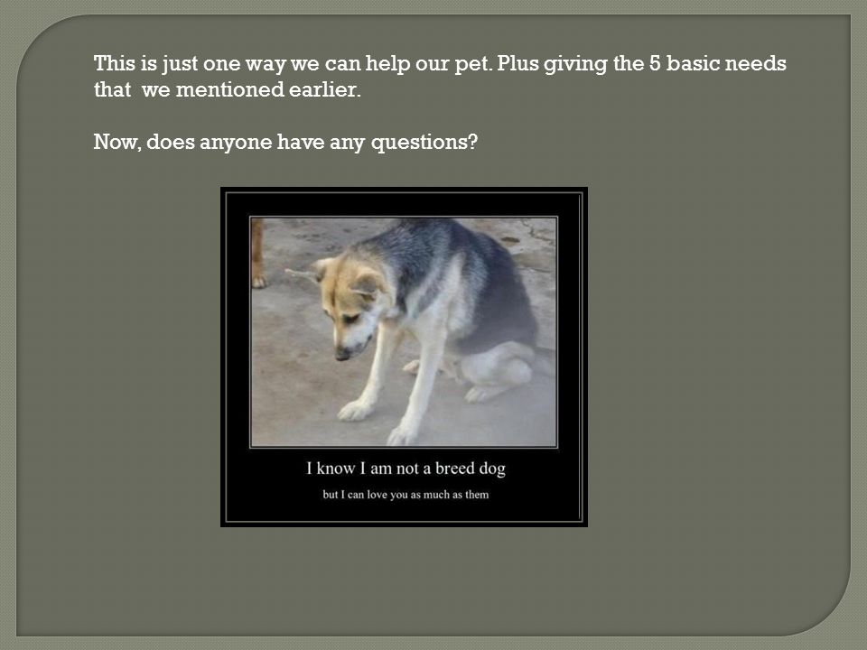 This is just one way we can help our pet. Plus giving the 5 basic needs that we mentioned earlier.