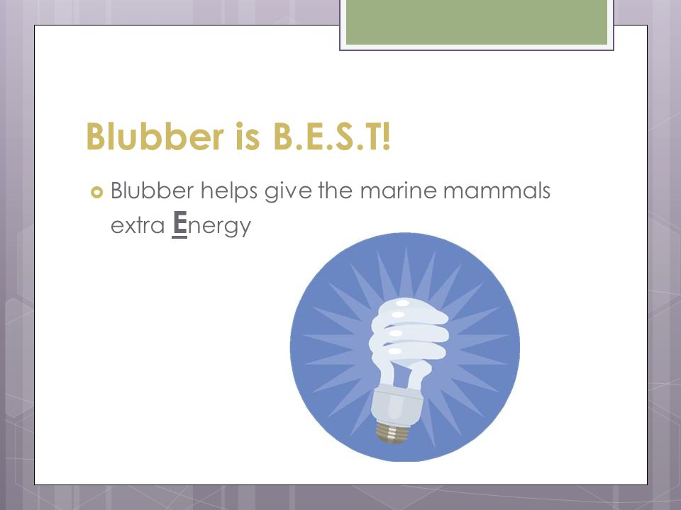 Blubber is B.E.S.T!  Blubber helps give the marine mammals extra E nergy