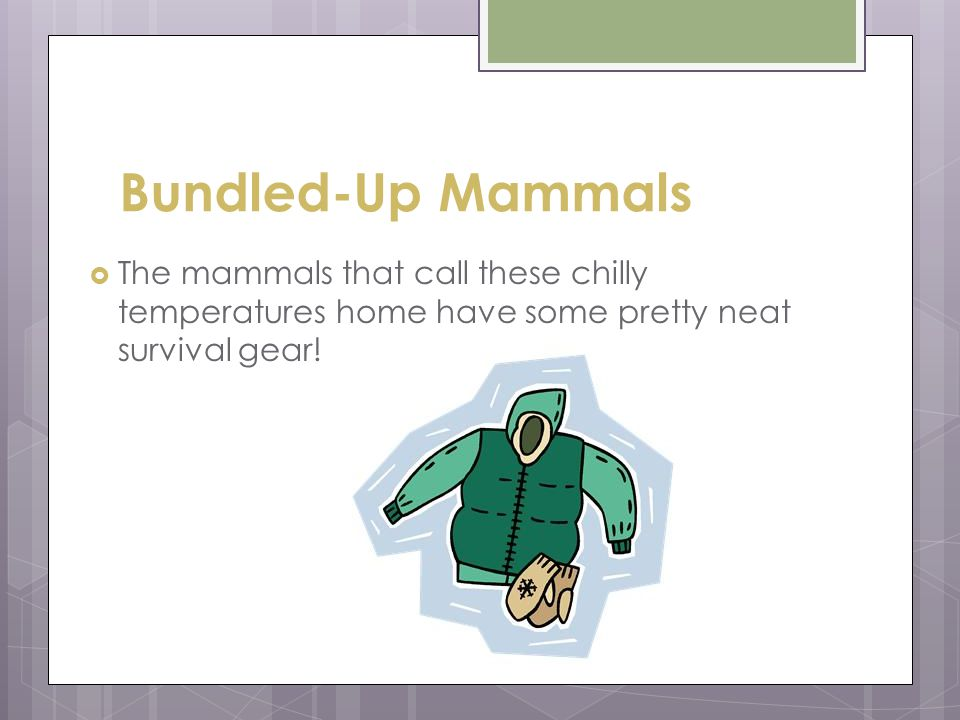 Bundled-Up Mammals  The mammals that call these chilly temperatures home have some pretty neat survival gear!