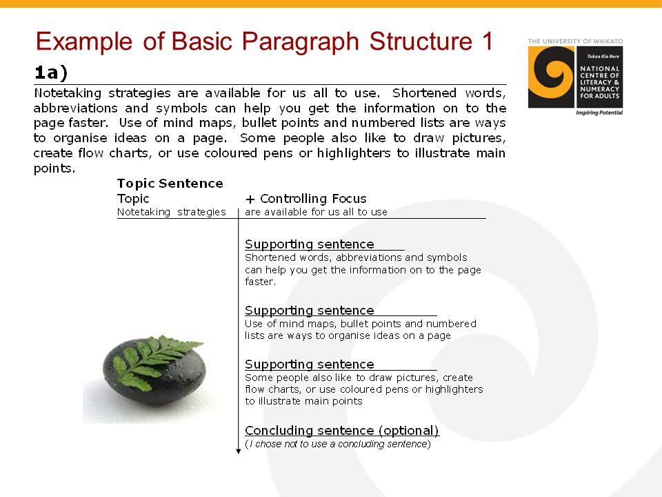 Example of Basic Paragraph Structure 1