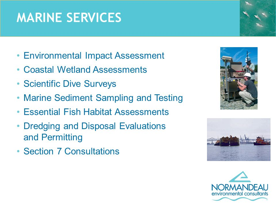 MARINE SERVICES Environmental Impact Assessment Coastal Wetland Assessments Scientific Dive Surveys Marine Sediment Sampling and Testing Essential Fish Habitat Assessments Dredging and Disposal Evaluations and Permitting Section 7 Consultations