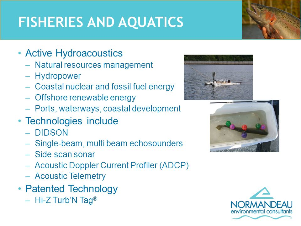 FISHERIES AND AQUATICS Active Hydroacoustics –Natural resources management –Hydropower –Coastal nuclear and fossil fuel energy –Offshore renewable energy –Ports, waterways, coastal development Technologies include –DIDSON –Single-beam, multi beam echosounders –Side scan sonar –Acoustic Doppler Current Profiler (ADCP) –Acoustic Telemetry Patented Technology –Hi-Z Turb'N Tag ®