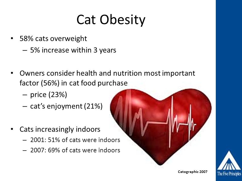 Cat Obesity 58% cats overweight – 5% increase within 3 years Owners consider health and nutrition most important factor (56%) in cat food purchase – p