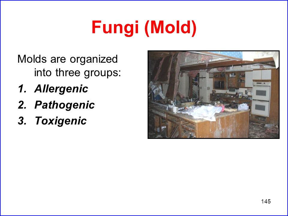 145 Fungi (Mold) Molds are organized into three groups: 1.Allergenic 2.Pathogenic 3.Toxigenic
