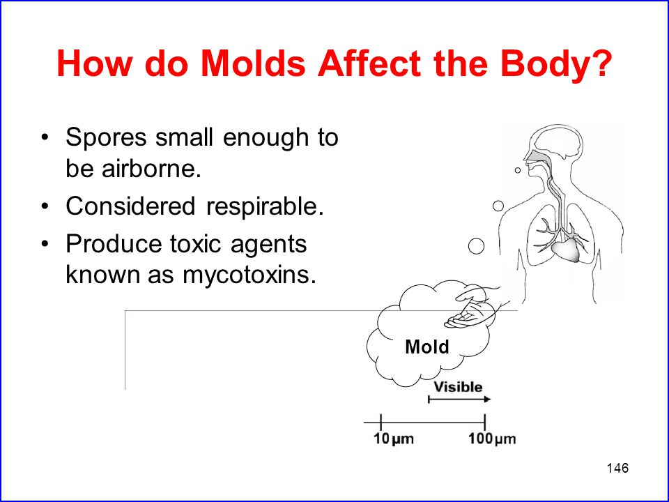 146 How do Molds Affect the Body. Spores small enough to be airborne.