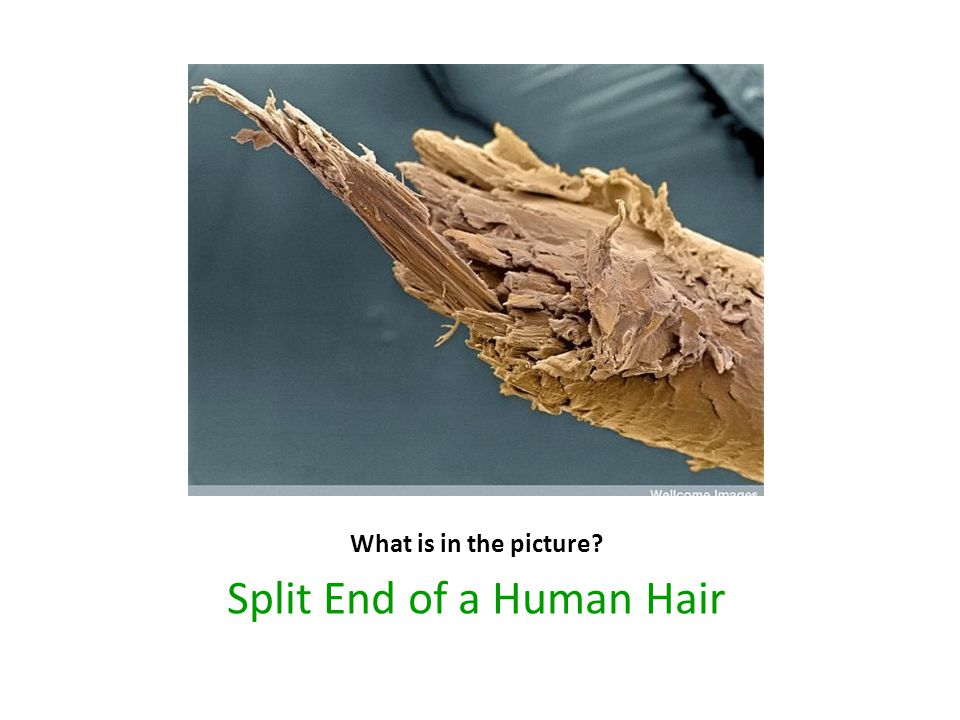 Split End of a Human Hair