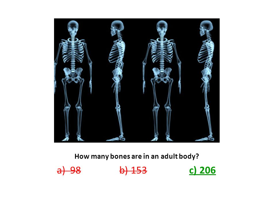 How many bones are in an adult body? a) 98 b) 153 c) 206