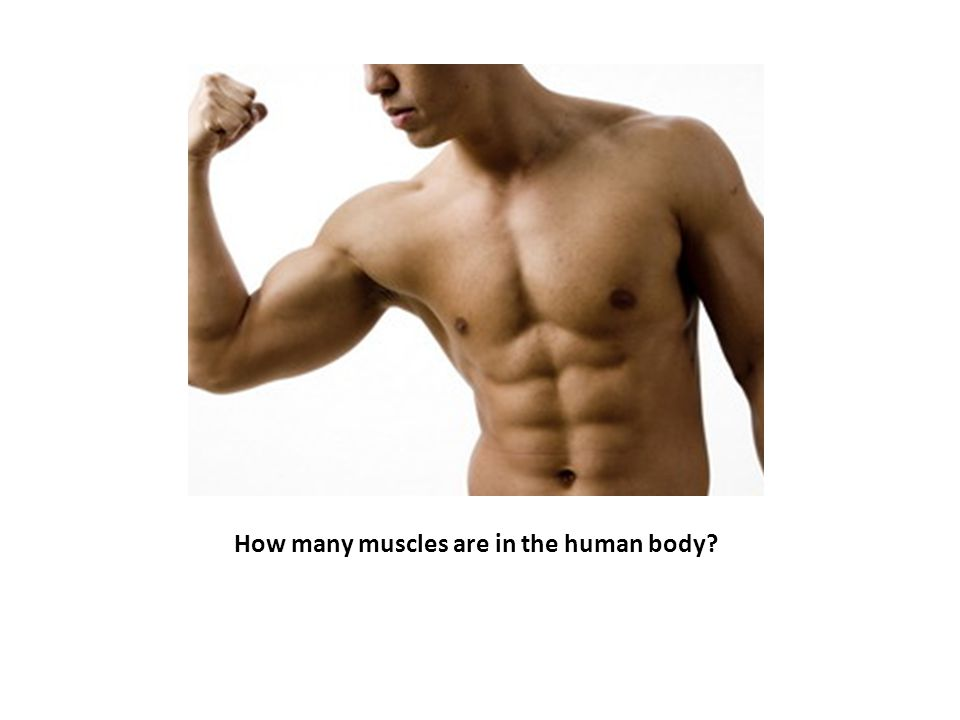 How many muscles are in the human body?