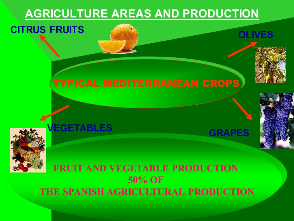 AGRICULTURE AREAS AND PRODUCTION TYPICAL MEDITERRANEAN CROPS FRUIT AND VEGETABLE PRODUCTION 50% OF THE SPANISH AGRICULTURAL PRODUCTION OLIVES CITRUS FRUITS GRAPES VEGETABLES