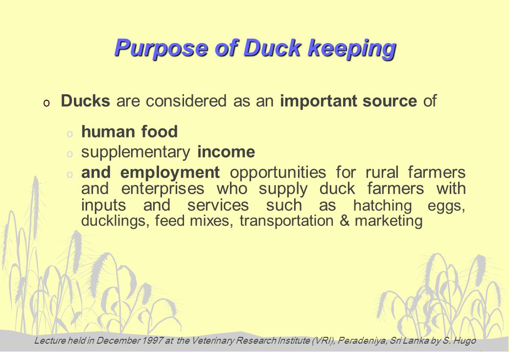 Lecture held in December 1997 at the Veterinary Research Institute (VRI), Peradeniya, Sri Lanka by S. Hugo Purpose of Duck keeping o Ducks are conside
