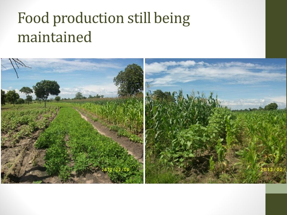 Food production still being maintained