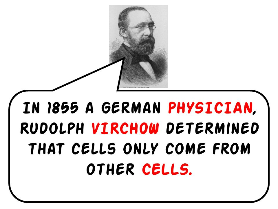In 1838 a GERMAN botanist, Matthias SCHLEIDEN concluded that all plants were COMPOSED of cells.