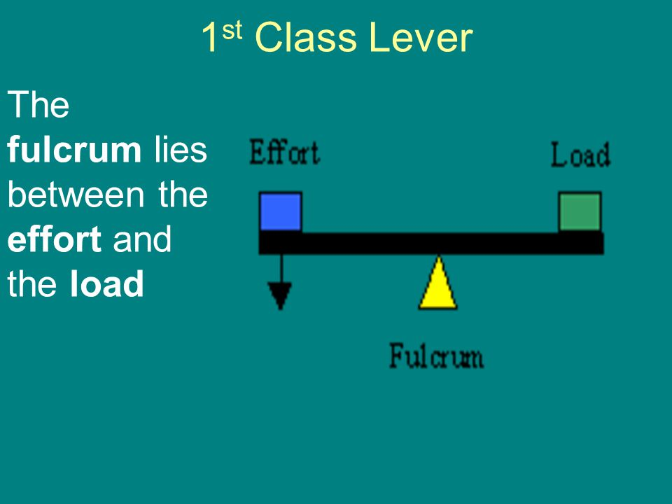 1 st Class Lever The fulcrum lies between the effort and the load