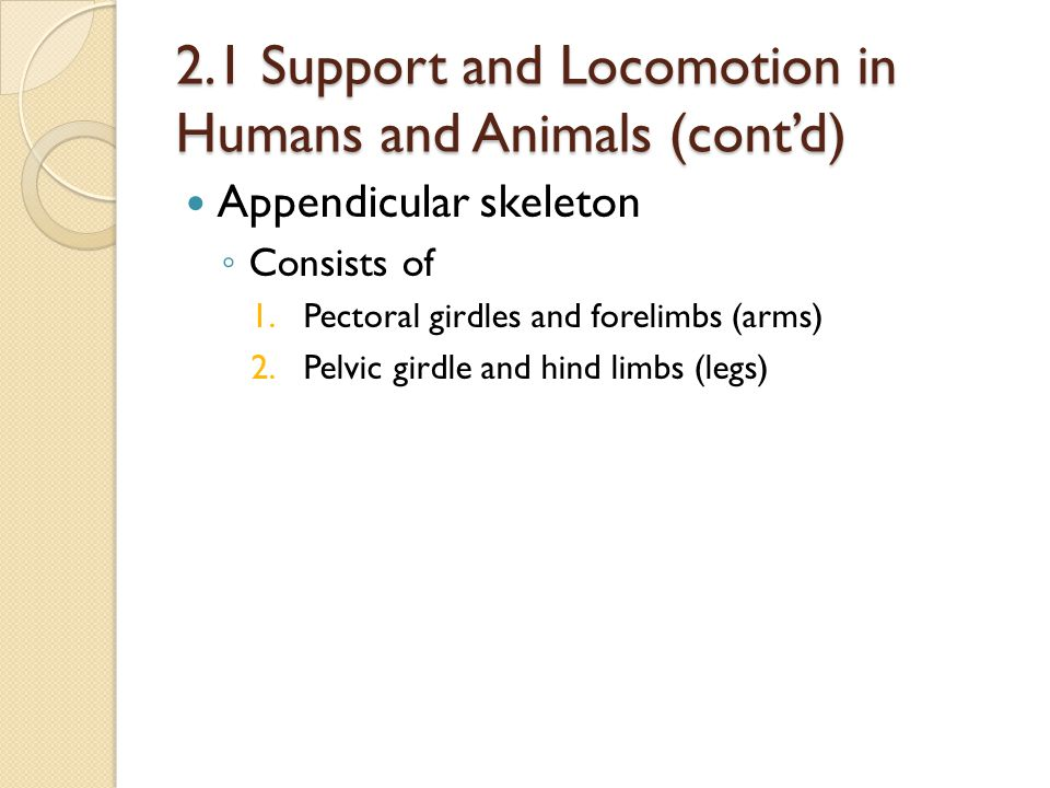 2.1 Support and Locomotion in Humans and Animals (cont'd) Appendicular skeleton ◦ Consists of 1.Pectoral girdles and forelimbs (arms) 2.Pelvic girdle