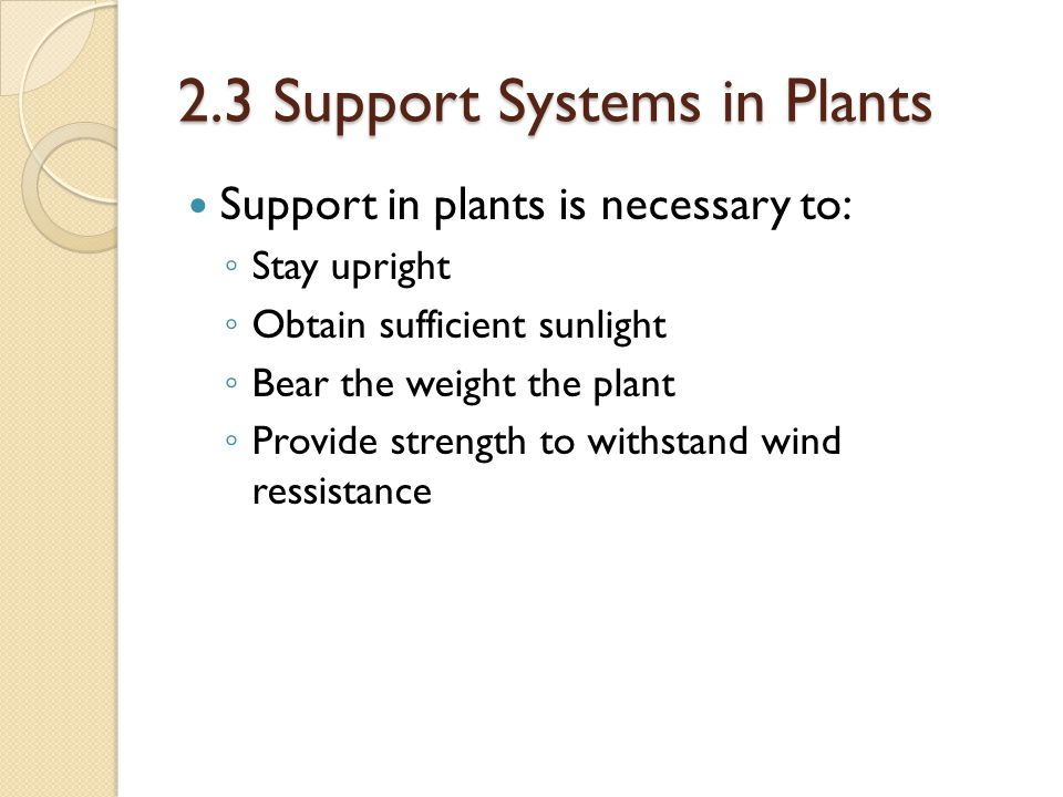 2.3 Support Systems in Plants Support in plants is necessary to: ◦ Stay upright ◦ Obtain sufficient sunlight ◦ Bear the weight the plant ◦ Provide str