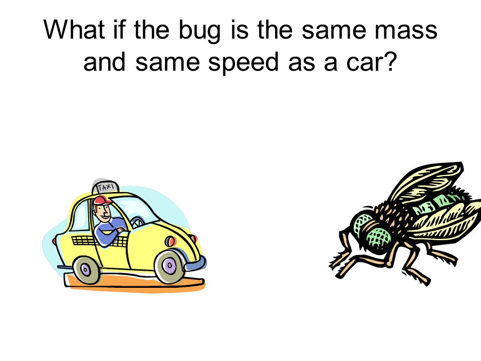 What if the bug is the same mass and same speed as a car
