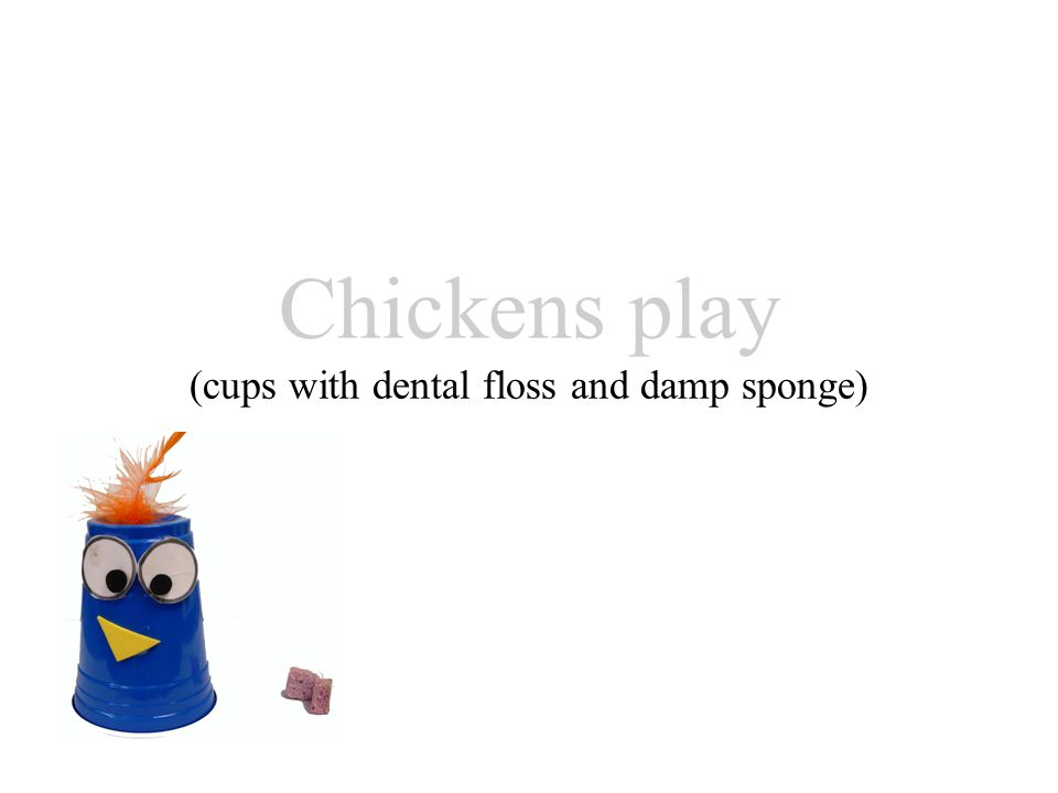 Chickens play (cups with dental floss and damp sponge)