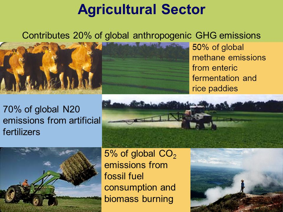 1.13 70% of global N20 emissions from artificial fertilizers 50% of global methane emissions from enteric fermentation and rice paddies Agricultural S