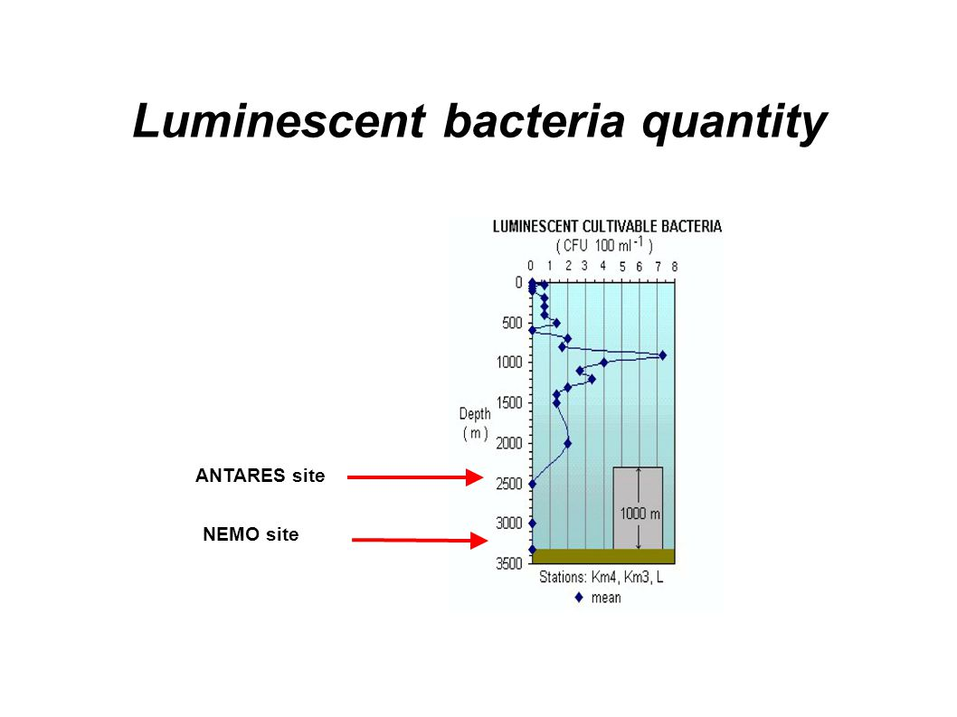 Luminescent bacteria quantity ANTARES site NEMO site