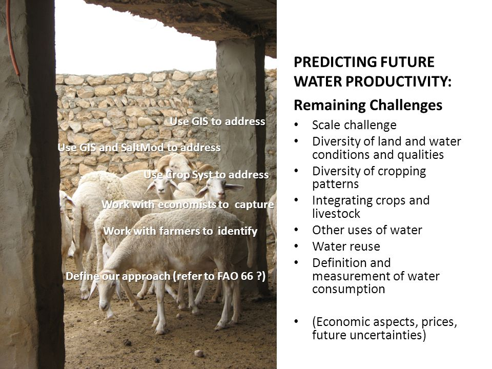 PREDICTING FUTURE WATER PRODUCTIVITY: Remaining Challenges Scale challenge Diversity of land and water conditions and qualities Diversity of cropping patterns Integrating crops and livestock Other uses of water Water reuse Definition and measurement of water consumption (Economic aspects, prices, future uncertainties) Use GIS to address Use Crop Syst to address Use GIS and SaltMod to address Work with economists to capture Work with farmers to identify Define our approach (refer to FAO 66 )