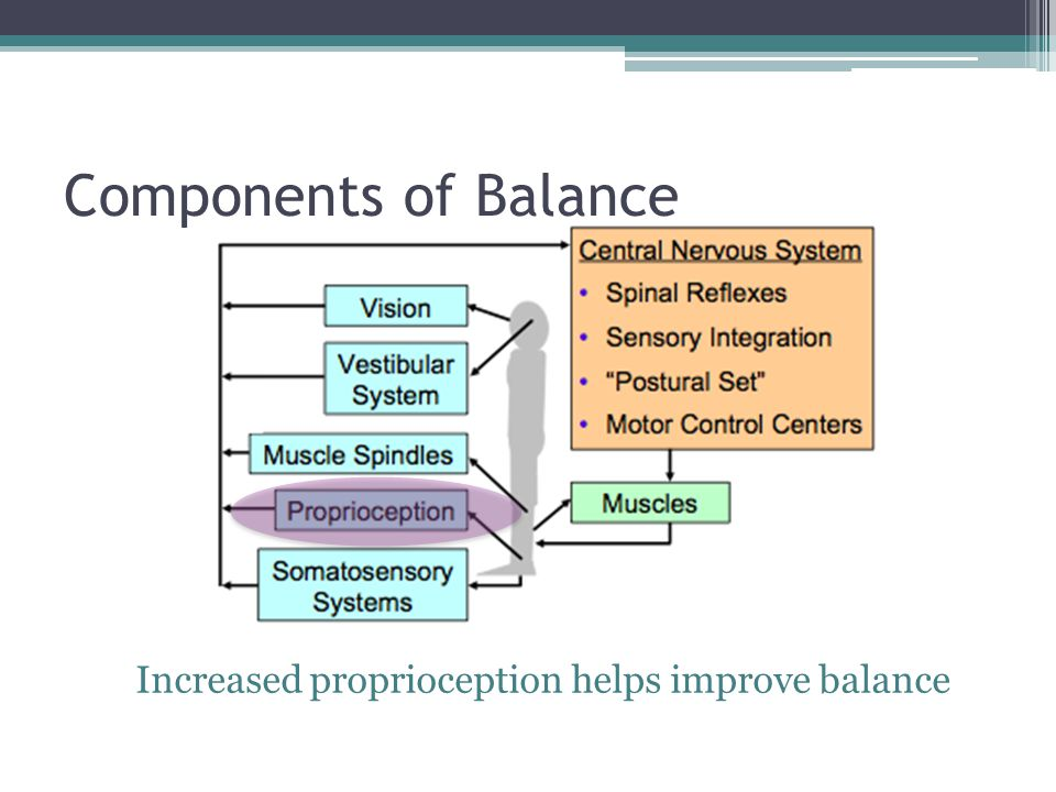 Components of Balance Increased proprioception helps improve balance