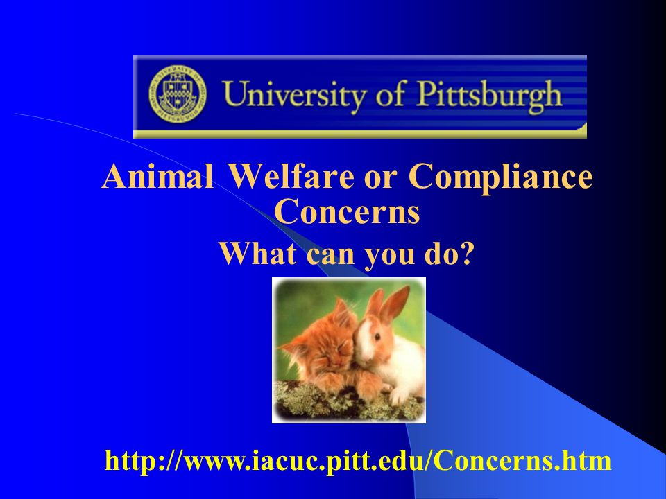 Animal Welfare or Compliance Concerns What can you do http://www.iacuc.pitt.edu/Concerns.htm