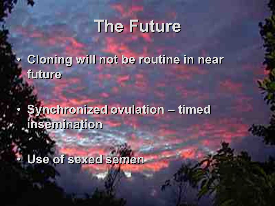 The Future Cloning will not be routine in near future Synchronized ovulation – timed insemination Use of sexed semen Cloning will not be routine in near future Synchronized ovulation – timed insemination Use of sexed semen