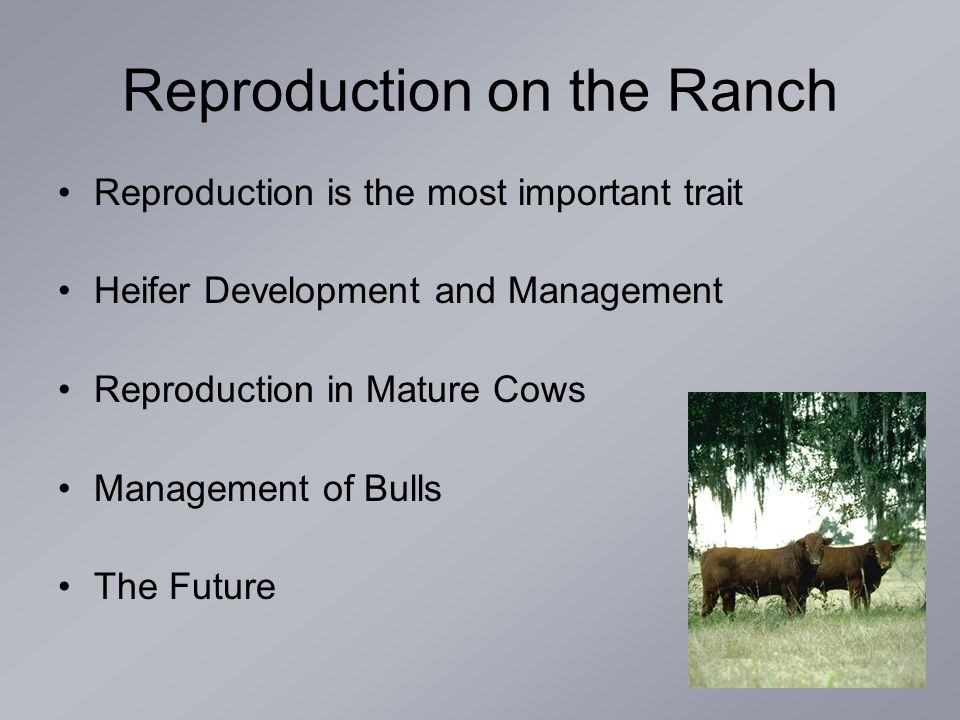 Reproduction is the most important trait Heifer Development and Management Reproduction in Mature Cows Management of Bulls The Future