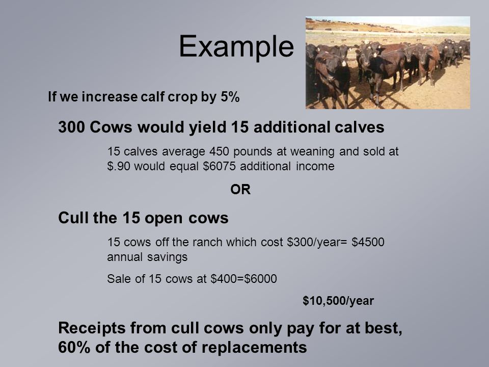 Example If we increase calf crop by 5% 300 Cows would yield 15 additional calves 15 calves average 450 pounds at weaning and sold at $.90 would equal $6075 additional income OR Cull the 15 open cows 15 cows off the ranch which cost $300/year= $4500 annual savings Sale of 15 cows at $400=$6000 $10,500/year Receipts from cull cows only pay for at best, 60% of the cost of replacements